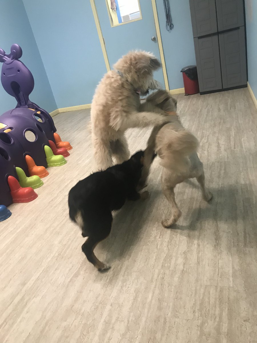 Luna, Gracie, and Cooper D bounce around