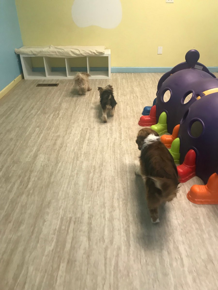 Tiger Lily, Violet, and Wyatt play follow the leader