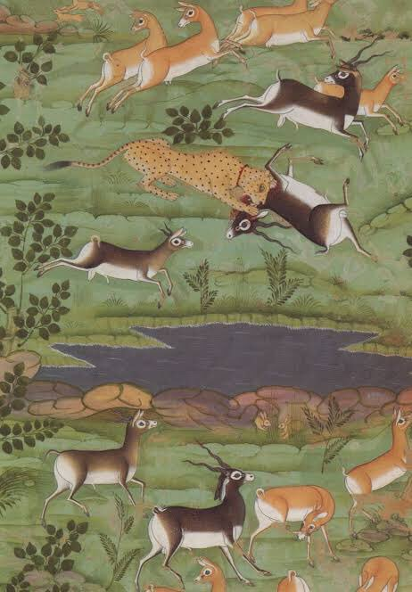 Check out this detail from a painting of Shahjahan's hunt. The Asiatic Cheetah (one endangered specie) hunts another (the black buck). Today, the Cheetah is known to survive only in Iran ! #BiodiversityDay