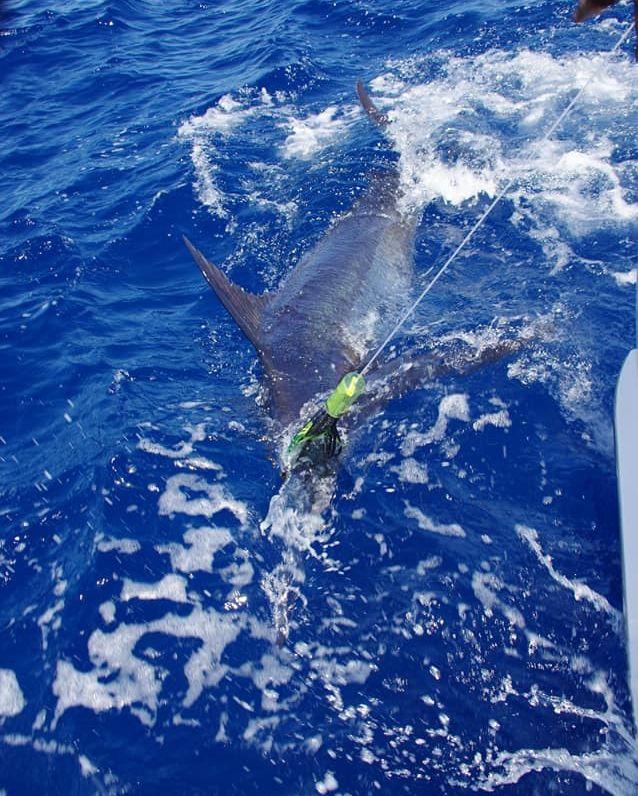 Cape Verdes - Mystic Blue went 4-8 on Blue Marlin.