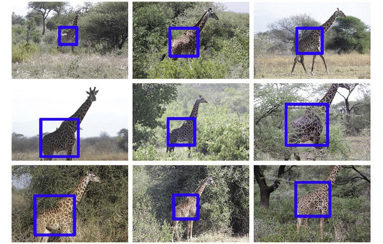 AI is being trained to recognize giraffes. Here's why https://wef.ch/2XkX4AS  #conservation #technology pic.twitter.com/jzfRa11Xaf