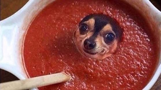 If a pup does not have sauce, then he is lost. But the same pup can get lost in the sauce.<br>http://pic.twitter.com/DHMWhuUVmi