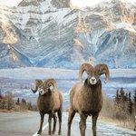 Image for the Tweet beginning: Mid-week traffic jam! Spring is