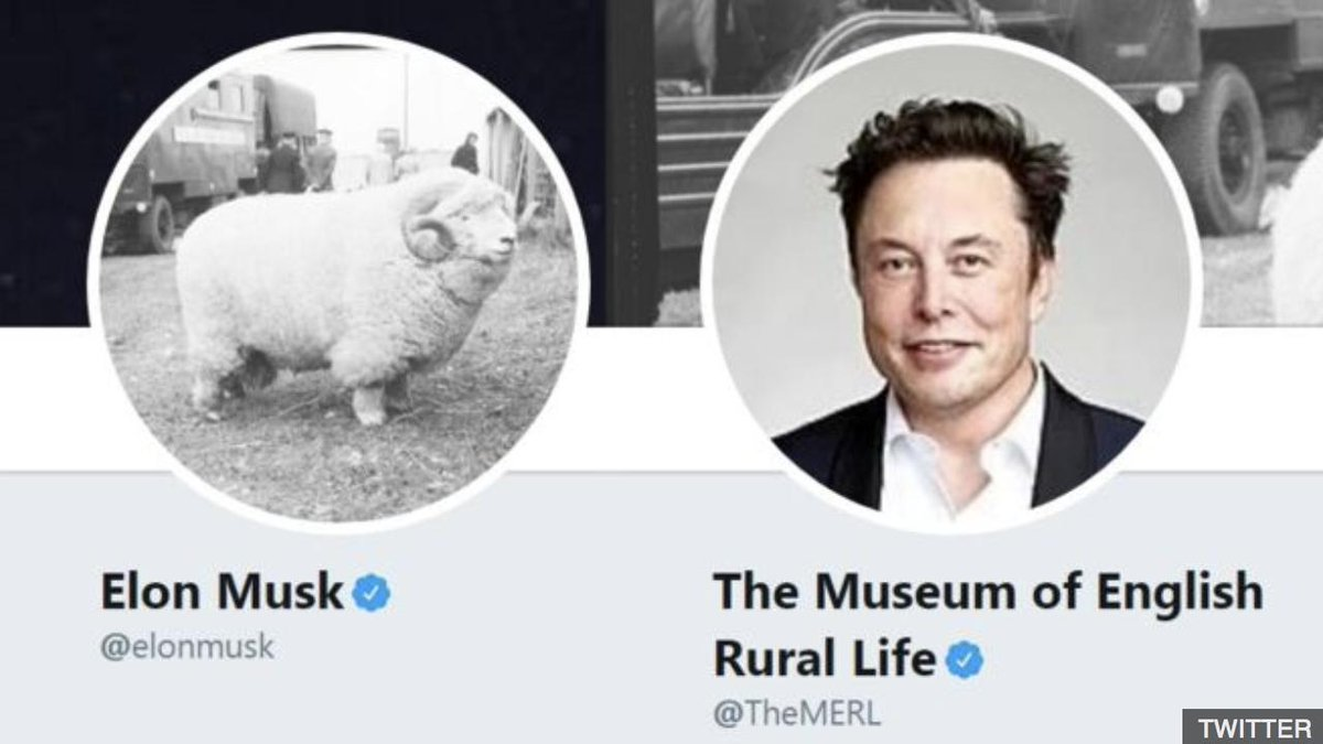 Tesla have 'hired' a witty tweeter who mocked Elon Musk over a photo of a sheep. 🐑 👉 http://bbc.in/2Wrs5Wt