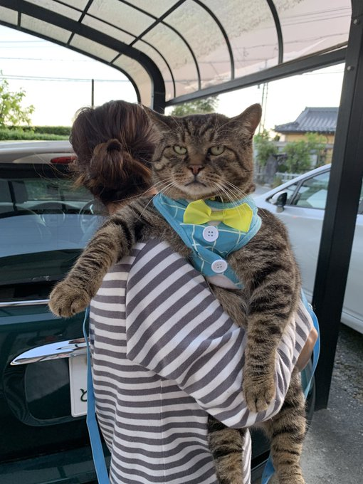 大きい 猫