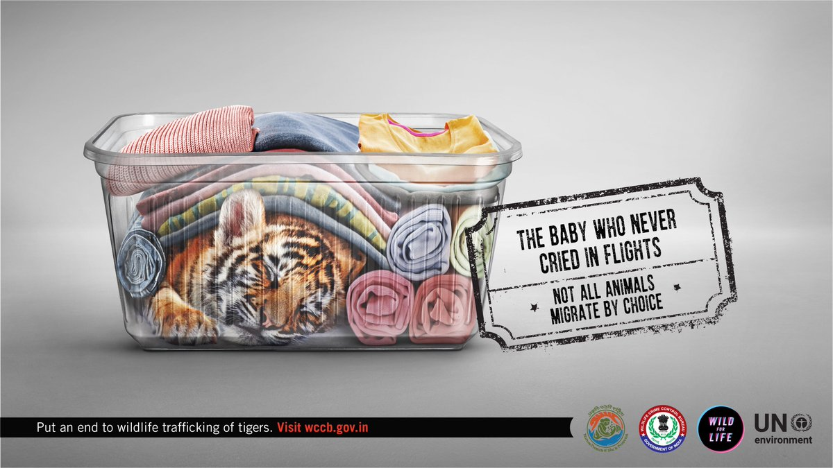 #WildlifeTrafficking endangers #India&#39;s national animal. The #tiger remains one of the most traded animals due to a huge demand for its skin, bones &amp; body parts in international markets. Put an end to this #ForcedMigration:  http:// bit.ly/30EAyEI  &nbsp;    #EndWildlifeCrime #WildForLife<br>http://pic.twitter.com/UCppit6yO9