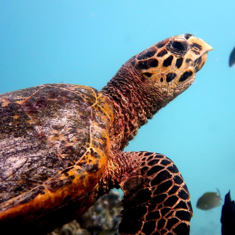 Turtle Bay Turtlebayuk Twitter