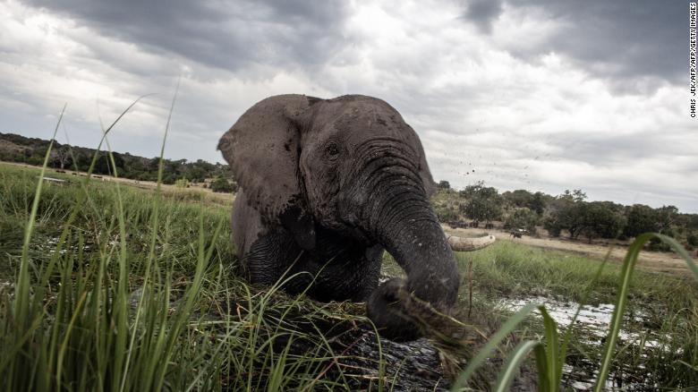 Botswana has lifted its ban on elephant hunting cnn.it/2W35zUt