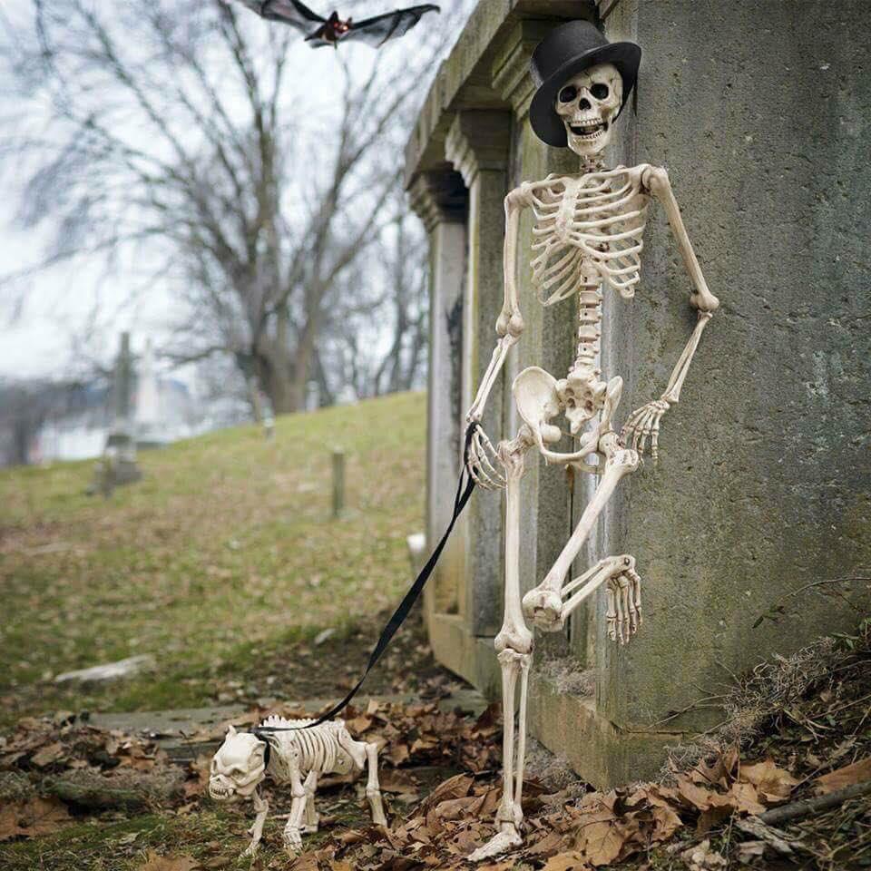 Прикольное скелет картинка, дорогой