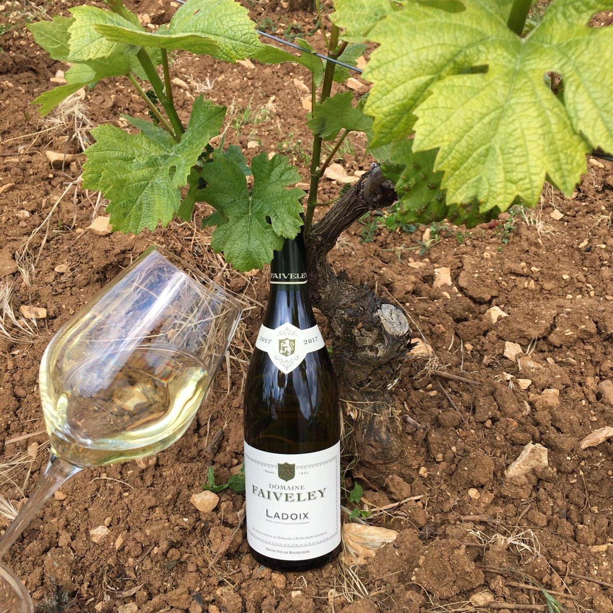 """Chardonnay Day = Funday !""  #Bourgogne #ChardonnayDay #vinblanc #winelover #dégustation #tasting #whitewine #ladoixblanc #cheers #happyday #àvotresantépic.twitter.com/oOlwAOvCal"