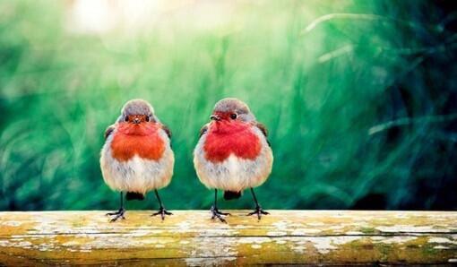 Happy thursday everyone...Feliz jueves a tod@s... #FelizJueves #HappyThursday #TweeterBirds<br>http://pic.twitter.com/DXmqz8nD4O