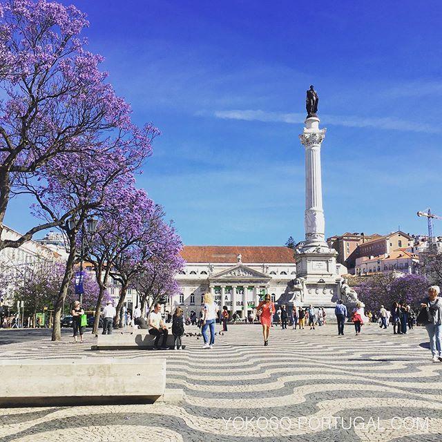 test ツイッターメディア - ロッシオ広場のジャカランダは、もうすぐ満開です。 #リスボン #ジャカランダ #ポルトガル https://t.co/LwJwSS1GNk