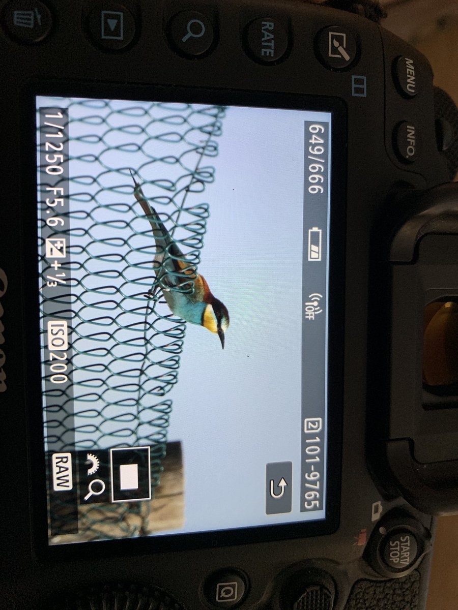 Had a cracking day today on Mallorca, Woodchat Shrike Bee-Eater and a first Nightingale our in the open very happy days <br>http://pic.twitter.com/M5x2OTvc7Q
