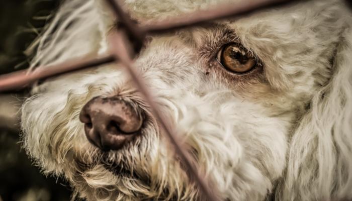 aufeminin: Un chien en bonne santé euthanasié pour être enterré avec sa maîtresse > https://www.aufeminin.com/news-societe/un-chien-en-bonne-sante-euthanasie-pour-etre-enterre-avec-sa-maitresse-s4001398.html?Echobox=1558618140#utm_medium=Social&utm_source=Twitter…