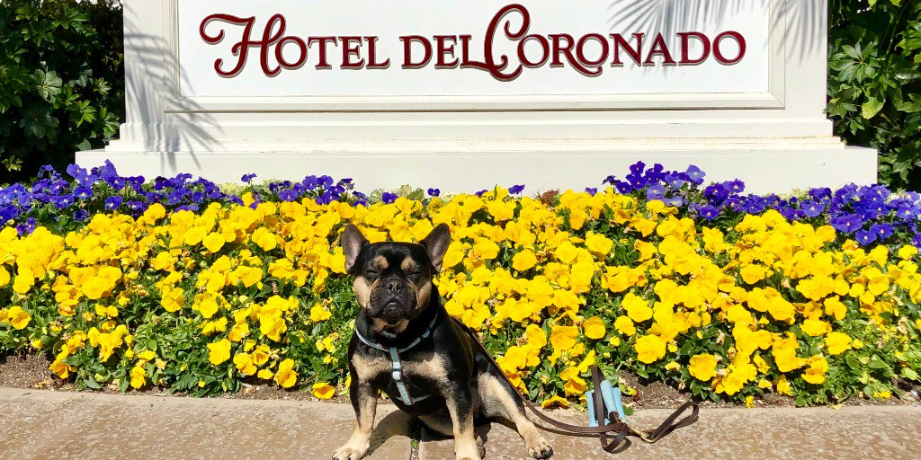 http:// ow.ly/te7g50qG0lK  &nbsp;   Is San Diego&#39;s famous Hotel Del Coronado really dog friendly? #dogtravel #petfriendly #dogfriendly<br>http://pic.twitter.com/bkwjld6IB7