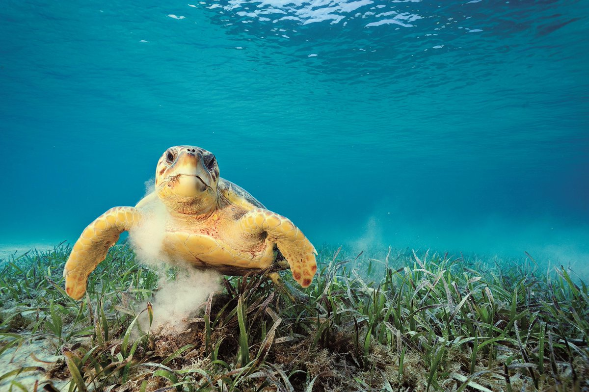 Happy #WorldTurtleDay! This photo can be seen in Ocean Soul, our traveling photography exhibition about the wonders of our ocean, which recently closed at the @MulticentroCC. Our traveling exhibitions are an incredible way to share stories with the world. Photo by @Brian_Skerry