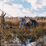 Sustainable #peatland farming could speed up wetland restoration, helping to safeguard a vital carbon sink and mitigate floods and droughts #CANAPE  #climatechange https://t.co/mR1aeY65kS