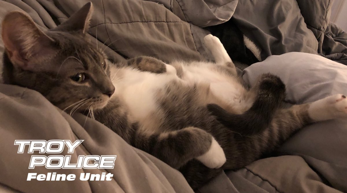 Seatbelt = Not On Ticket = Received Your Face = Sad   Pawffficer Donut = Not Impressed Up = Buckle Hotel = Trivago #ClickItOrTicket  #PoliceCat<br>http://pic.twitter.com/VhwASzerP9