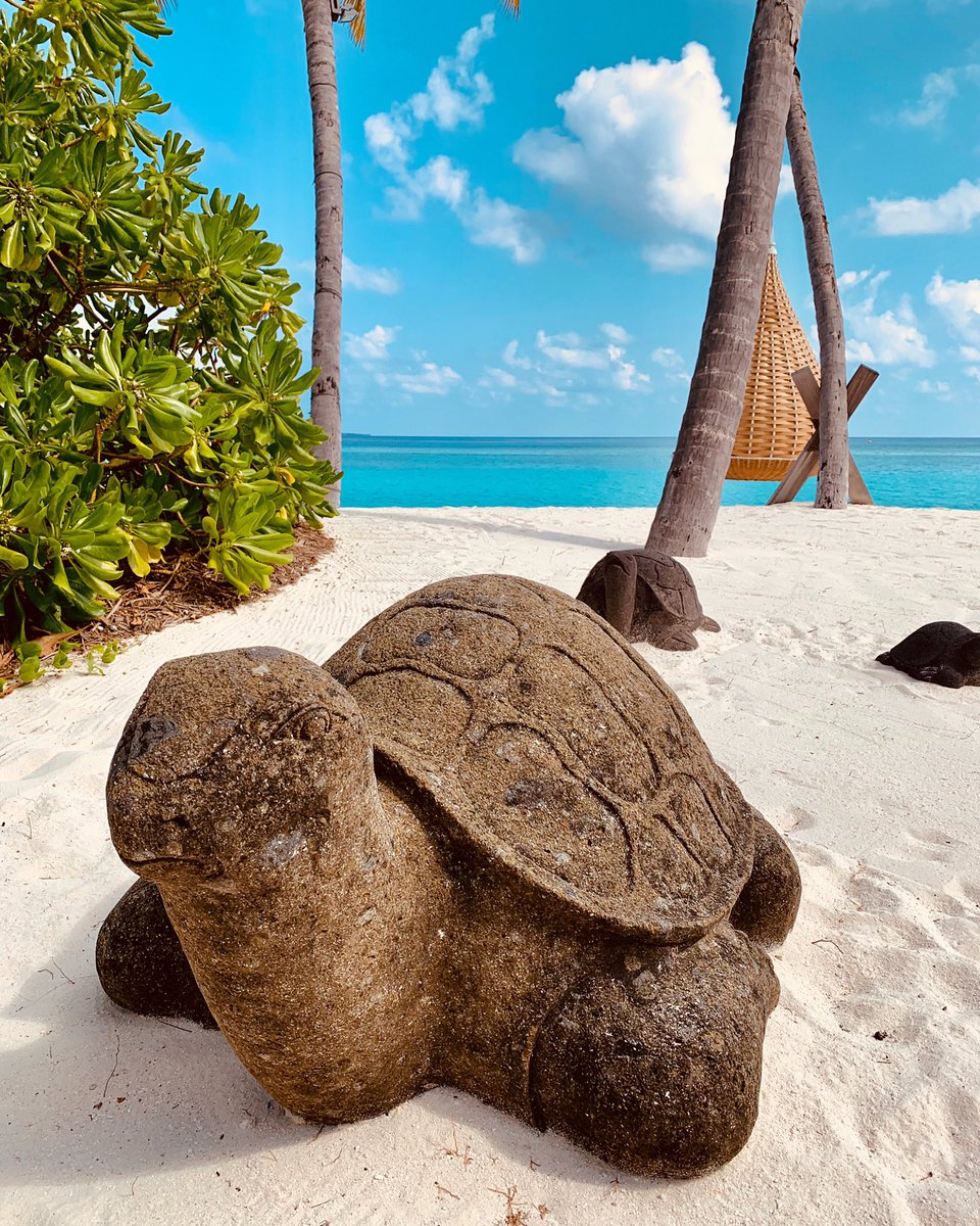 """Happy #WorldTurtleDay! Did you know that """"Velaa"""" means """"turtle"""" in the local Maldivian language? #VelaaPrivateIsland is named after the generations of sea turtles that flock, year after year, to nest on our sandy shores! Find out more: ps://t.co/xCwChrwSAJ<br>http://pic.twitter.com/xYGNj31Von"""