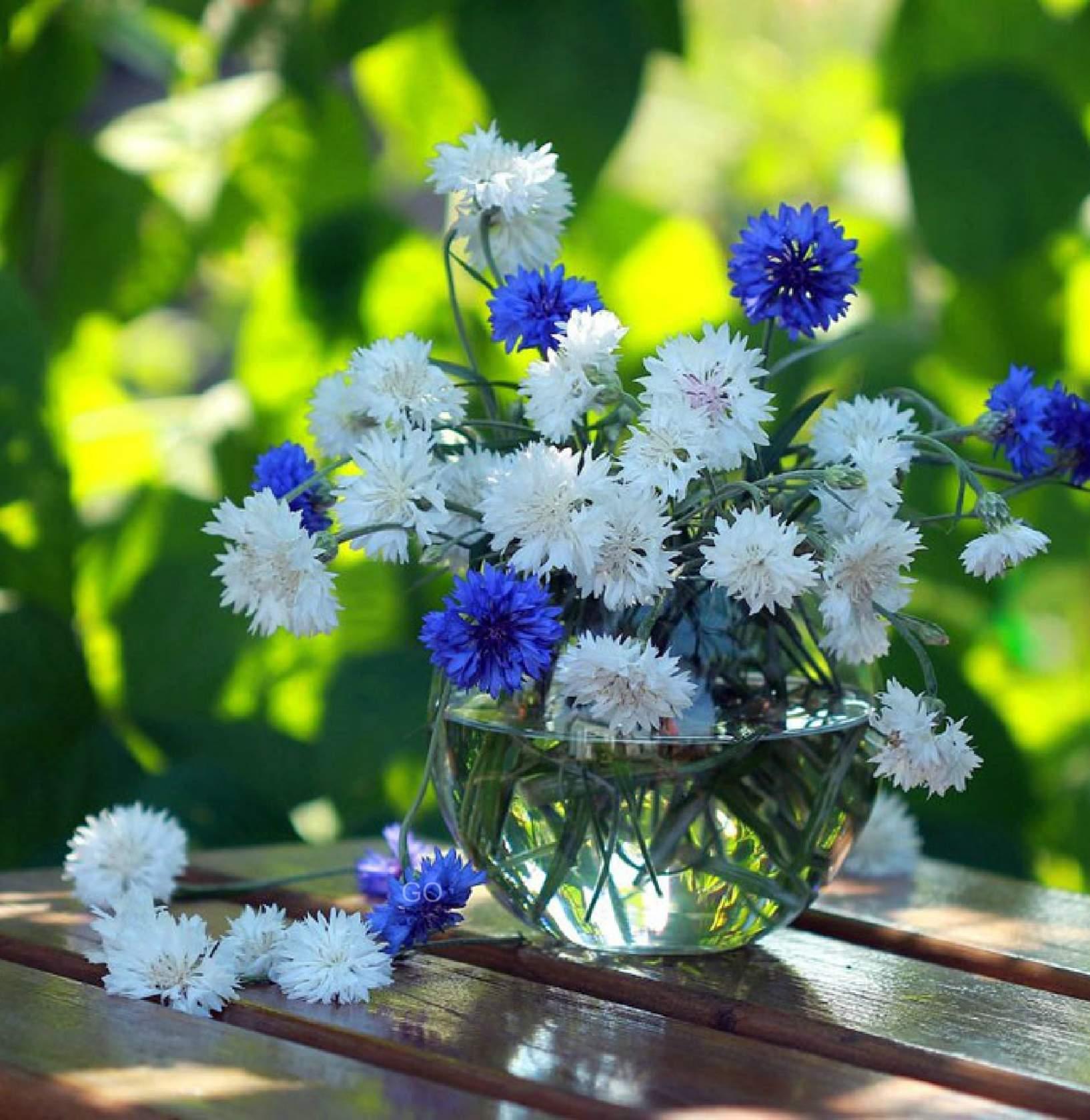День, открытки с полевыми цветами красивые с добрым утром