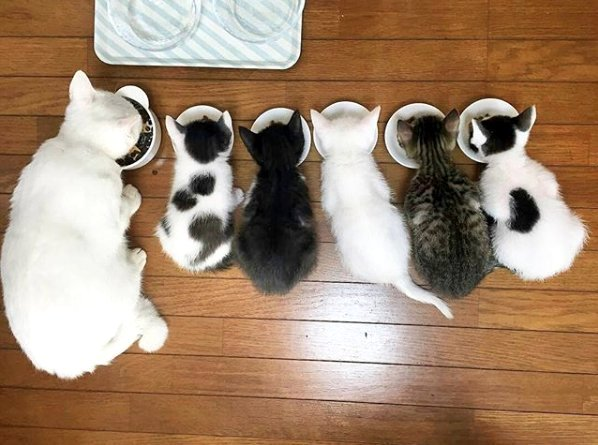 Lunch time and the entire family comes together  #caturday #catlove #puppylove #houseofcats #kittycat<br>http://pic.twitter.com/ghRUztzjQA