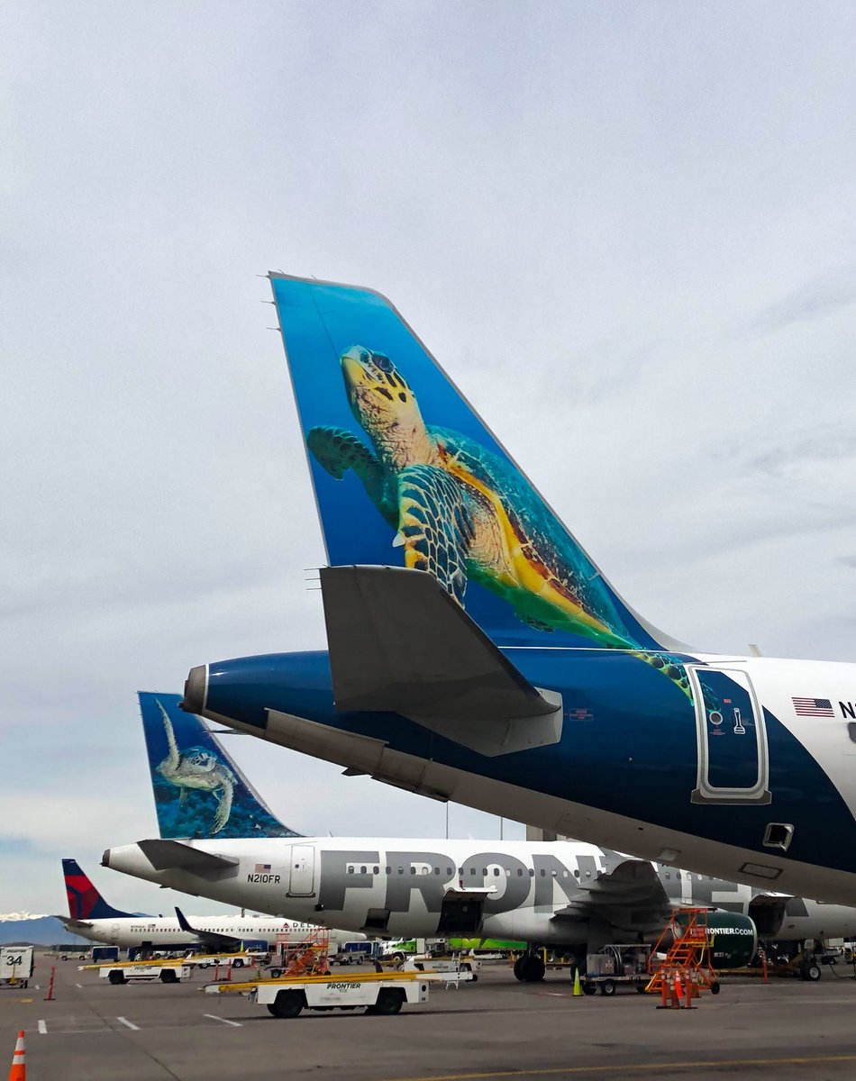 frontier airlines on twitter not only is it throwbackthursday featuring sheldon but it s also worldturtleday honoring both sheldon and shelly the sea turtles richard oliver https t co kpk5pn85d4 sea turtles richard oliver