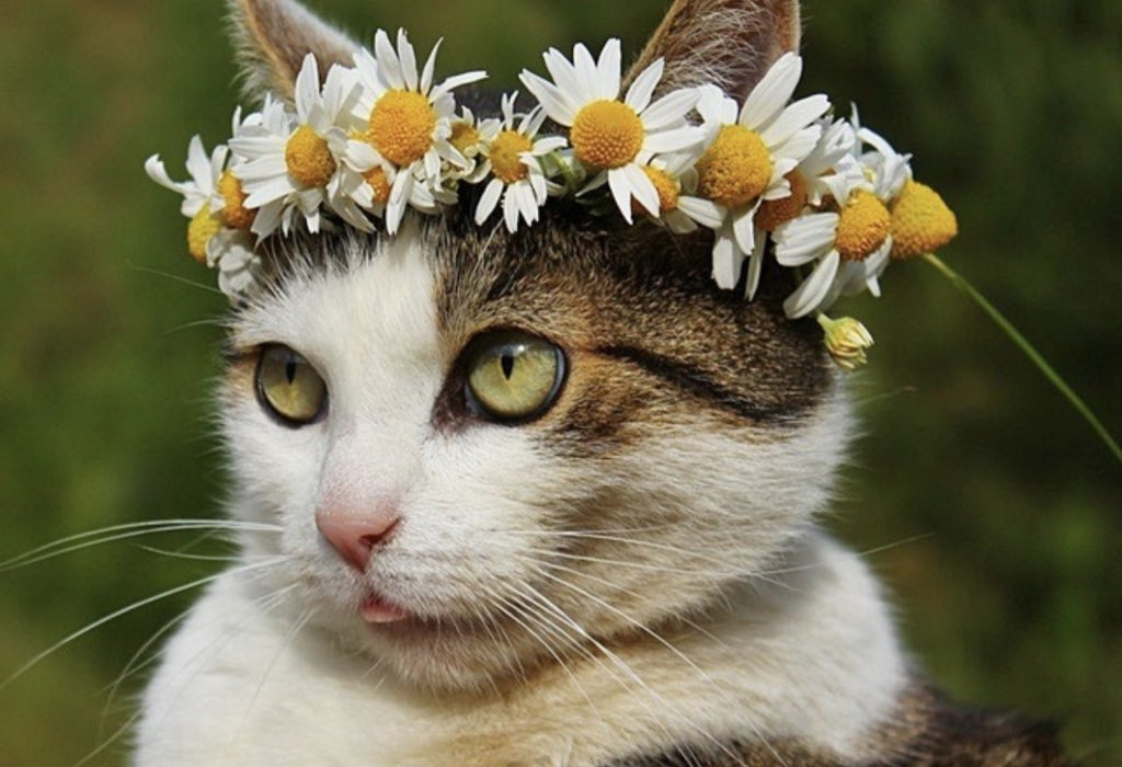 летний кот картинка тебе
