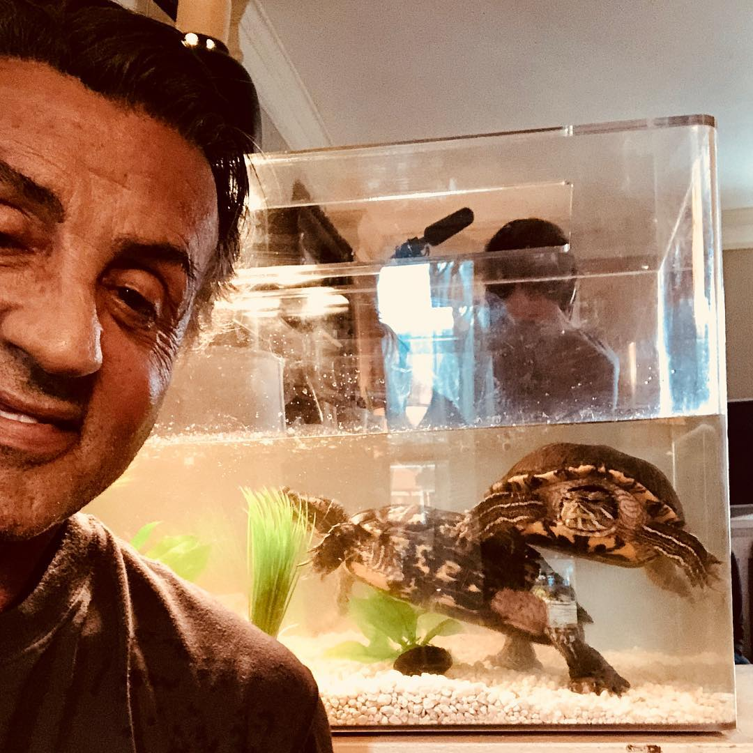 Today is World Turtle Day  so we wanted to remind you that Sylvester Stallone kept the two original turtles from Rocky! <br>http://pic.twitter.com/gb0ajMQtH2
