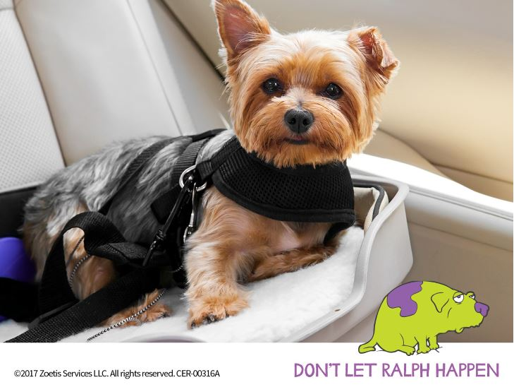 Tired of not being able to bring your best friend along for the ride? Your pup could be suffering from canine motion sickness. Talk to your vet about a solution! #dogtravel <br>http://pic.twitter.com/dZWGGZVKM3