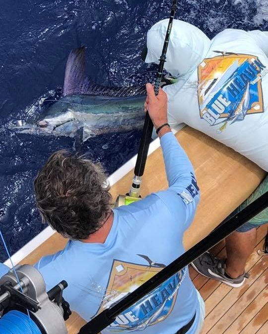 Anguilla - Capt. Ed Thompson on Blue Heaven went 1-2 on Blue Marlin and 1-1 on White Marlin.