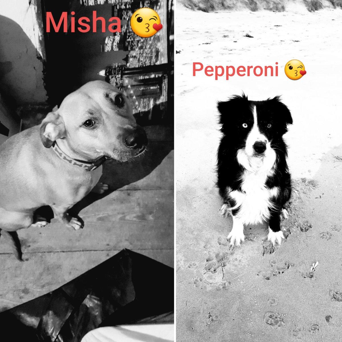 my 2 Dogs 🐶🐶