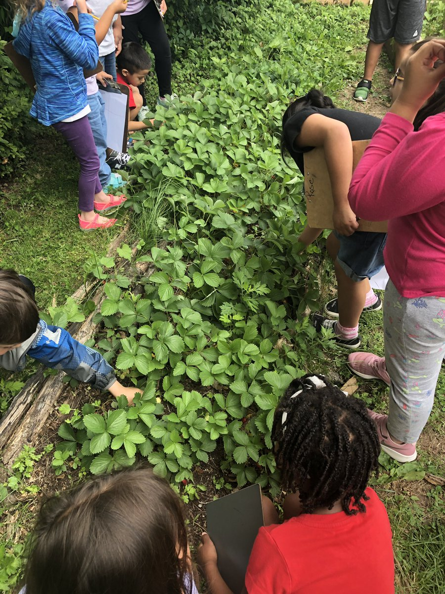 Stopping to walk and taste through the garden with first graders was a reminder to all of us about how full our <a target='_blank' href='http://search.twitter.com/search?q=schoolgarden'><a target='_blank' href='https://twitter.com/hashtag/schoolgarden?src=hash'>#schoolgarden</a></a> <a target='_blank' href='http://twitter.com/CampbellAPS'>@CampbellAPS</a> is these days! Check out the lists we compiled! <a target='_blank' href='http://search.twitter.com/search?q=ediblelandscape'><a target='_blank' href='https://twitter.com/hashtag/ediblelandscape?src=hash'>#ediblelandscape</a></a> <a target='_blank' href='https://t.co/VPEdvAoCCO'>https://t.co/VPEdvAoCCO</a>