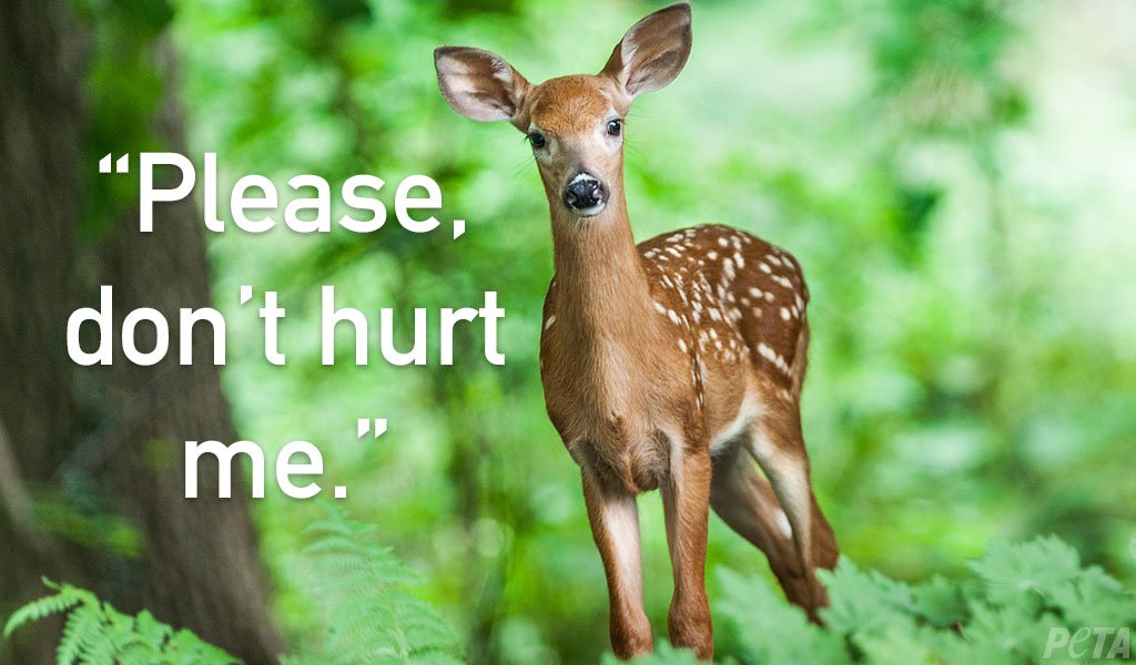 RETWEET if you would never kill her or any other animal. #BanHunting<br>http://pic.twitter.com/KD1C1W7bvp