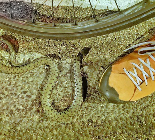 Snake! Not your standard Outer London roadkill fare... bit.ly/2wml0rb