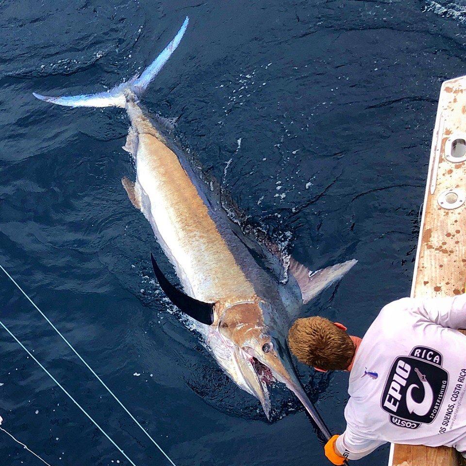 Los Suenos, CR - Epic released a Black Marlin and 5 Sailfish.