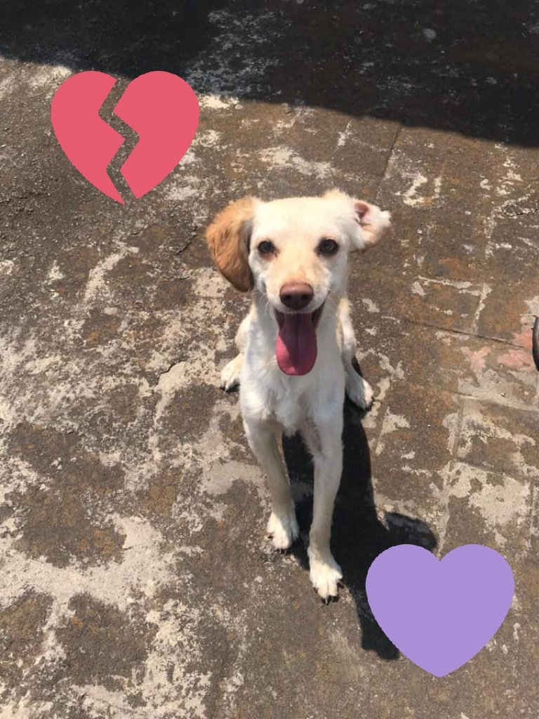 Perros Encontrados 🆘�LaWera33�'s photo on #FelizViernesATodos