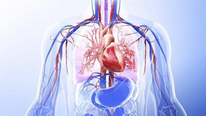 يحفظ بقاء المعادن بالجسم .. ويستهلك السكريات في التغذية..أطباء أجانب درسوا تأثيرات الصوم العضوية والكيماوية ويكتشفون فوائد إعجازية.http://sabq.org/PzKrs8