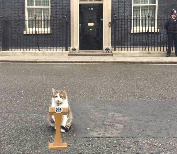 Larry the Cat's photo on Boris