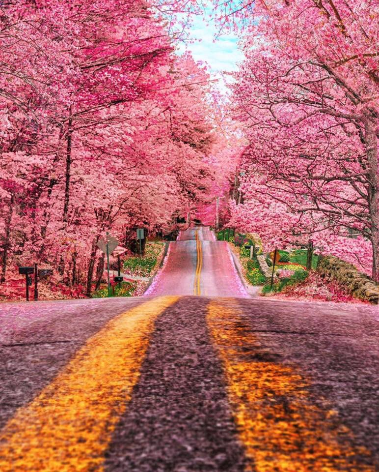 The garden of the world has no limits, Except in your mind. ― Rumi  Foster, Rodhe Island  photo by Kiel James Patrick   #rumi #poetry #sufism #beloved #rhodeisland #photography #kjp #flowers #spring #road #beauty