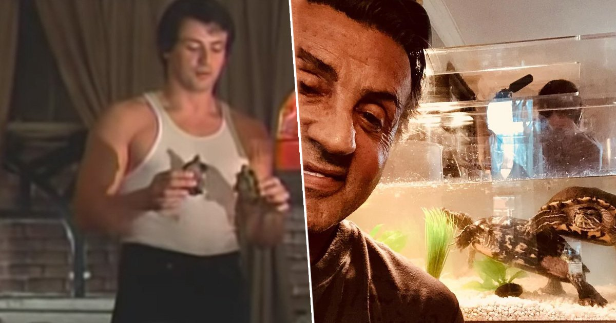 Sylvester Stallone kept the two turtles from Rocky and they&#39;re now 44 years old    https://www. unilad.co.uk/animals/sylves ter-stallone-kept-the-two-turtles-from-rocky-and-theyre-now-44/?source=twitter &nbsp; … <br>http://pic.twitter.com/axenPDVQIX