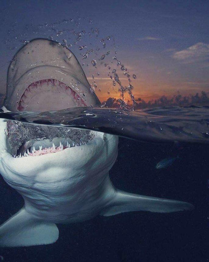 Сталкер рабочий, картинка прикол акула