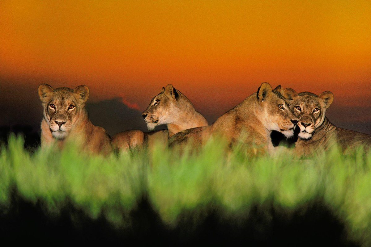 Hey Pembroke Pines! Into Africa, the beautiful photography exhibition, is open at the Frank Gallery. See the wonders of Africa's wildlife, from the savannas to the jungles, through the lens of @LantingFrans.  http://onnatgeo.org/v2