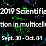 #Event - #CSM2019 | #PhD students and #Postdocs are encouraged to submit an abstract for a short talk or a poster! 📨  Submit your abstract during your online registration! 👉📝 https://t.co/FIG0pi1KCE  cc. @univamu @CNRS_dr12 @Insermpacacorse @CentraleMars
