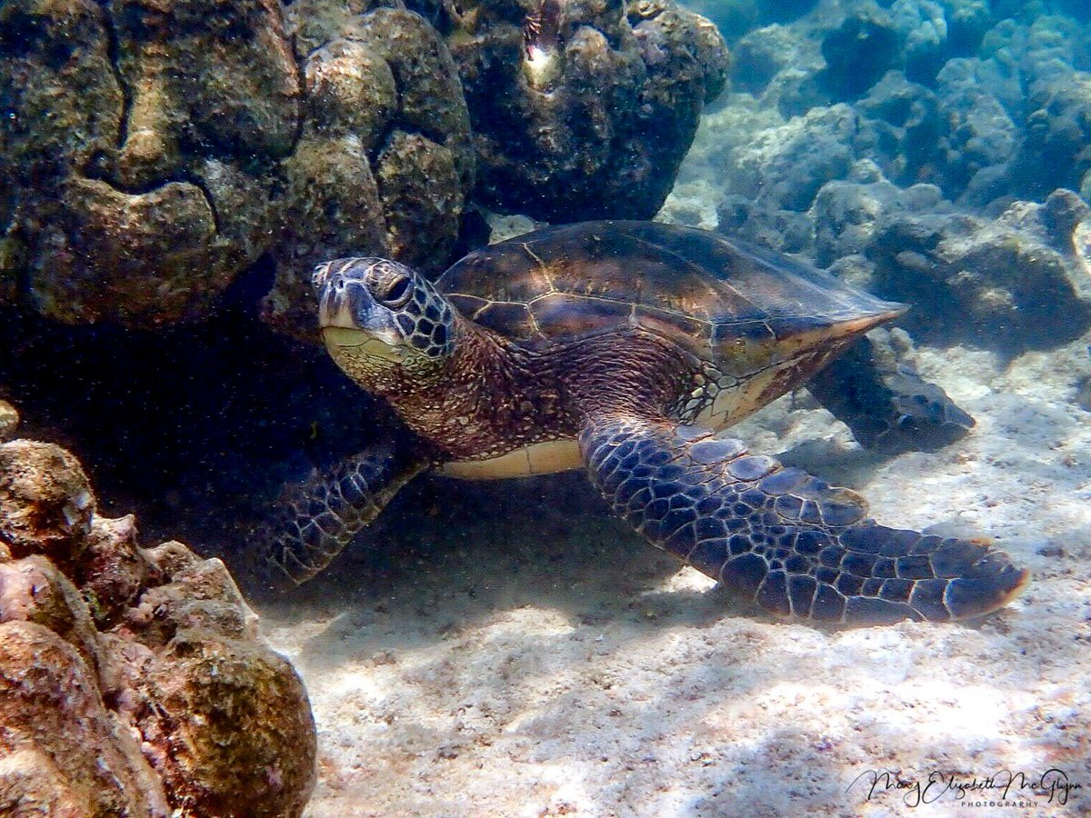 Today is #WorldTurtleDay. We need to protect these beautiful creatures. #Honu