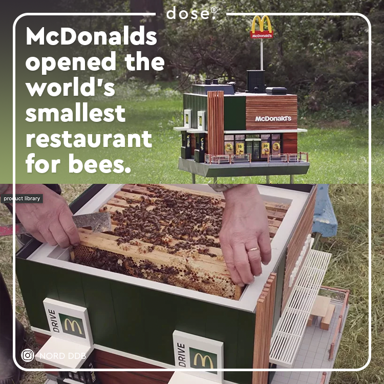 The McHive is a part of McDonald's wellbeing and preservation of bees initiative in Sweden. 🐝