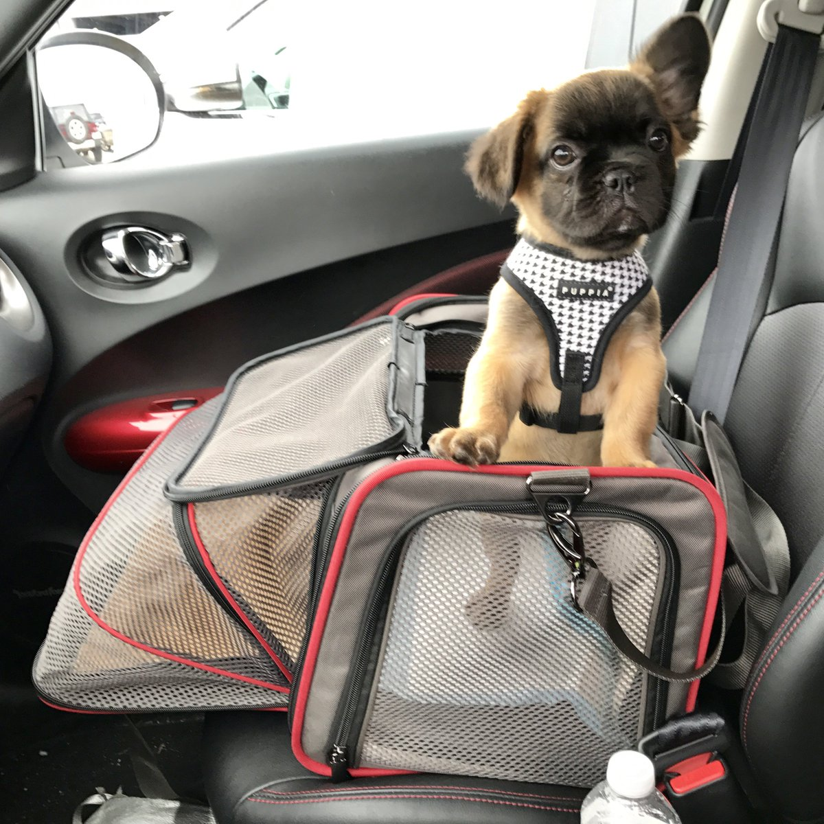 ESSENTIAL PET TRAVEL PRODUCTS  http:// ow.ly/4TBy50qG0Cs  &nbsp;   I've been traveling with dogs for over 15 years now. Planning what to bring is always a challenge, but I've found a few items that are essential when packing for a pup.  #dogtravel <br>http://pic.twitter.com/v4Yjiyxyv2