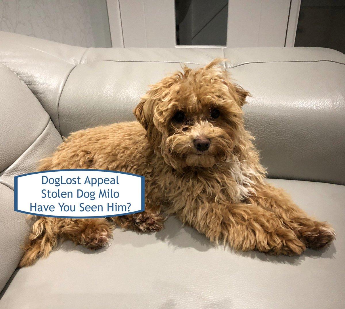 Etiqueta #doglost en Twitter