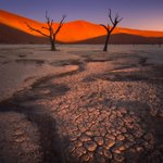 """Image for the Tweet beginning: """"The Guardians of the Desert"""""""