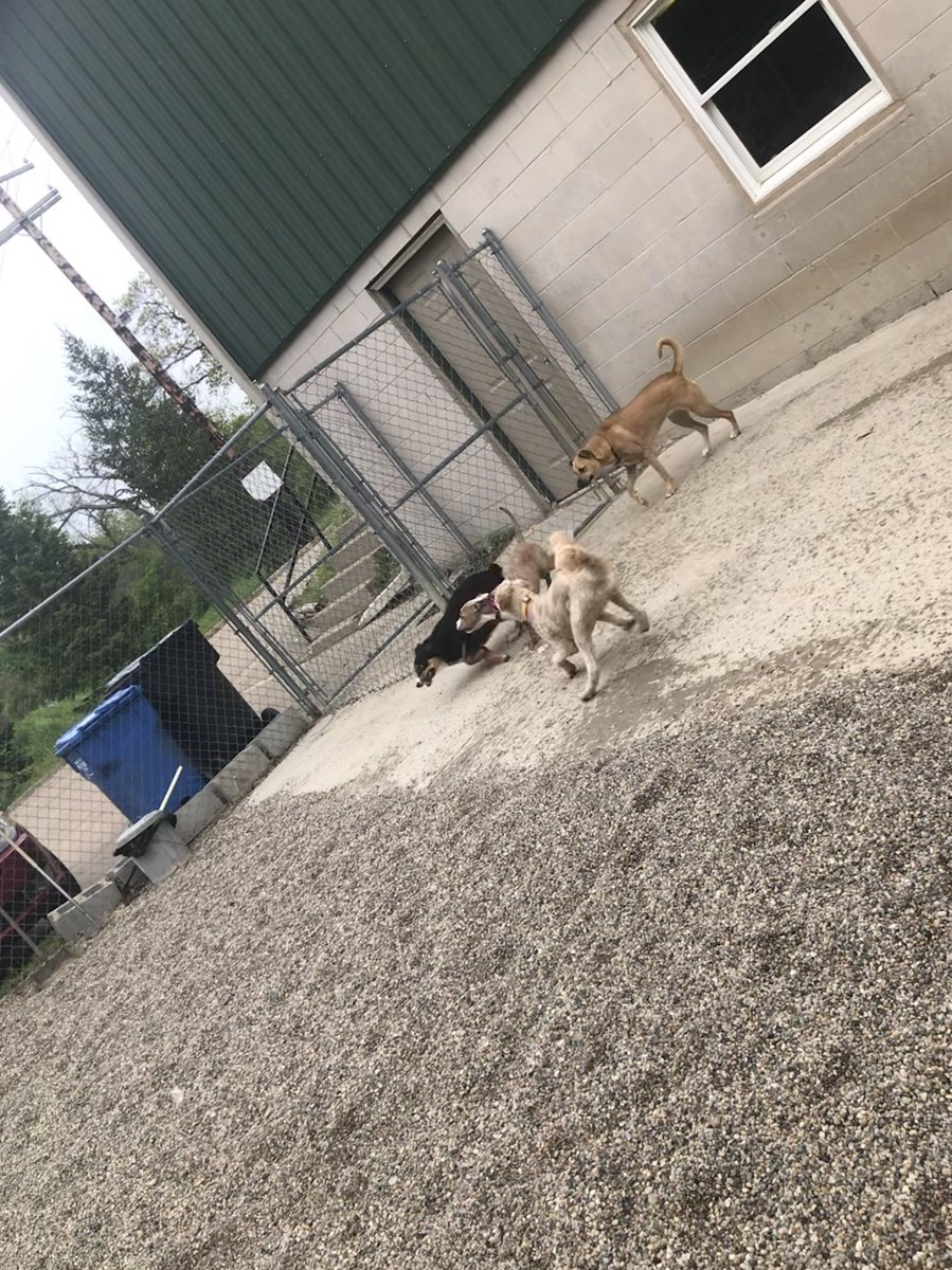Gracie, Zoe, Ellie, and Cooper play!