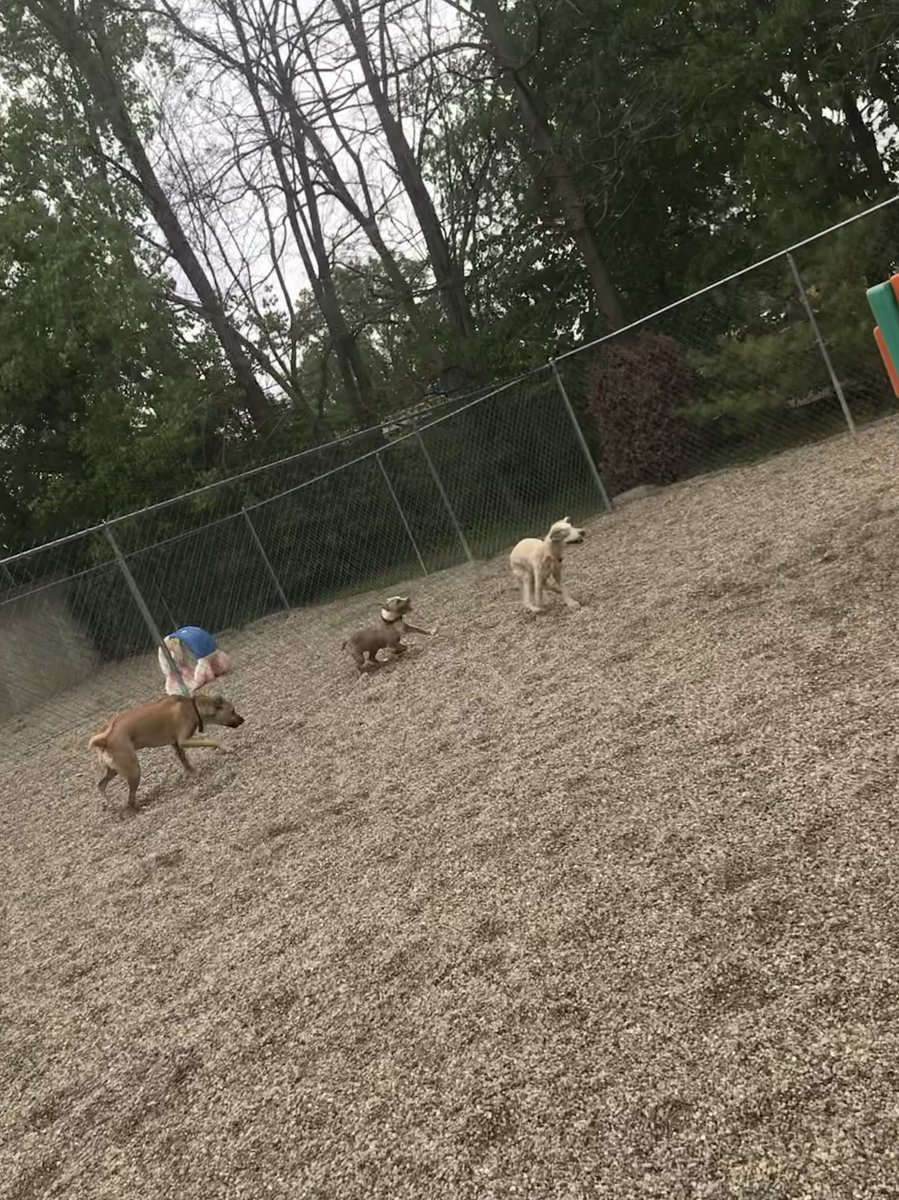 Cooper races ahead of Ellie and Zoe